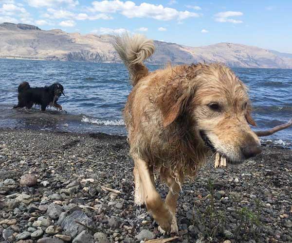 kamloops dog training