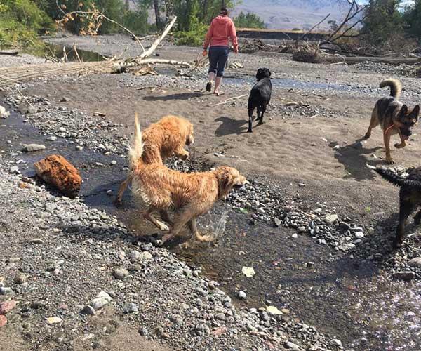 dog obedience school kamloops bc